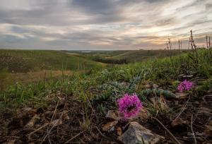 Changes in the Flint Hills, Blooming of Wildflowers on the Tallgrass Prairie of Kansas